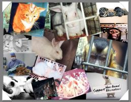 Collage of animal testing by luv2sing