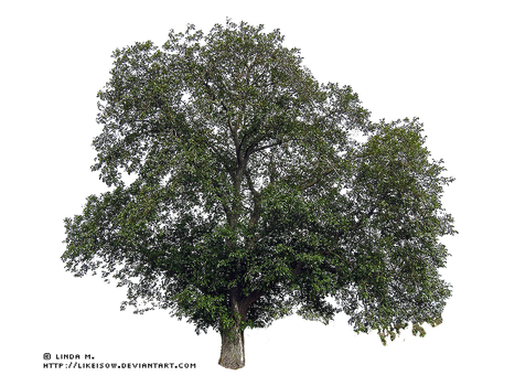 -LindaM Baum Tree 002 by likeisow