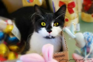 Happy Easter from Kitty by sydneypetography