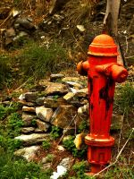 fire hydrant on the woods by vanouka
