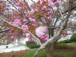 Tree Blossoms Color by Beth-BethTheColorful