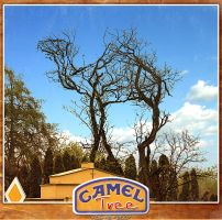 CamelTree by inObrAS