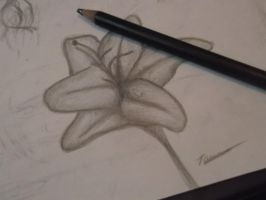 Lilly Flower. by PurpleWillowTrees