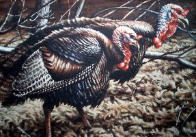 turkey stamp entry by traits