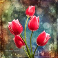 Tulips by Direct2Brain