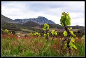 Where The Vines Grow by allym007