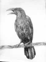 Crow by clodhen