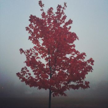 Foggy Red Octobers Morning by FlafleMonster