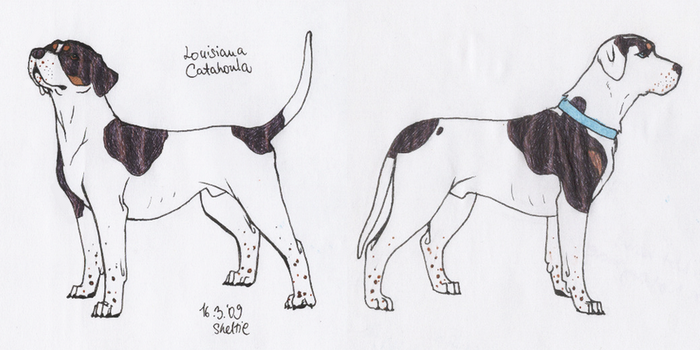 Louisiana Catahoula by Shel-chan