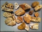 -My Oak Grove Fossil Specimens-  KutkuMegsan by KutkuMegsan