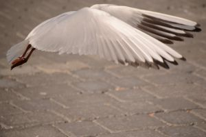 Landing by yourfellowhuman