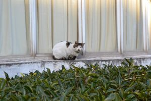 Cat on a Ledge by Amarganth
