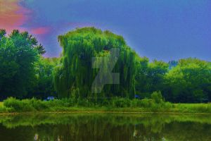 Raining on the Willow by vanaleapicz