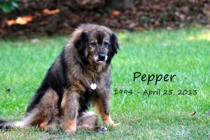 Pepper by wolfywox
