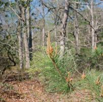 The Fresh Smell of Pine by Mossmill