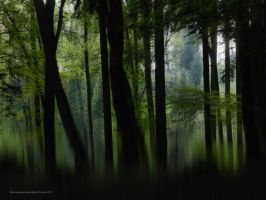 Enchanted Forest by artamusica