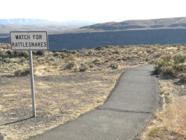 Watch for Rattlesnakes by RFHartwell