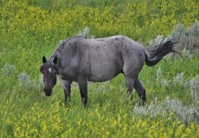 Wild Horse by ArtistStock