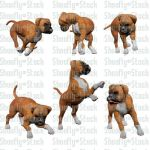 Boxer Puppies Stock 4 by Shoofly-Stock