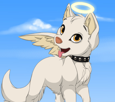 Angela,Puppy adoptable by bbpets