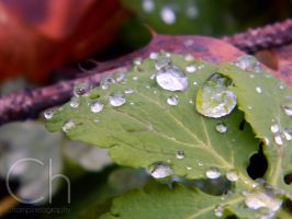 Frozen Drops by Champineography