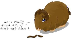 TP : a cavy life part 2 by anya1916