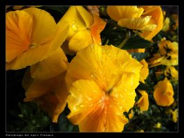 Raindrops On April Flowers by dhuusaraH