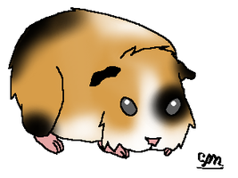 guenapig baby for echoflood-chan by Maniactheleader