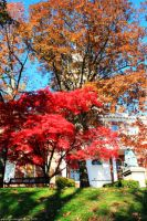 Autumn At the State House by withlovexoxo