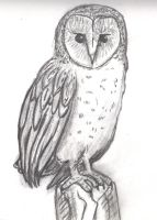 Barn Owl Sketch by ToPendi