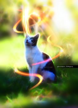 The Thinking Cat by Dsings