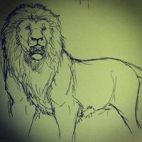 lion sketch by Seranalu