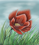 Poppy by memoriesenclosed