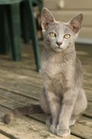 Cat Stock 103 by Malleni-Stock