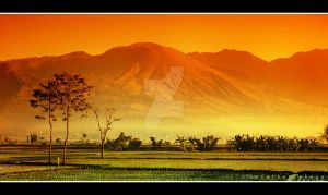 sawah mars by indonesia