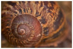 Snail Shell Macro by madrush08