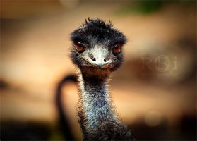 Ostrich. by rob-i