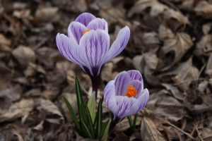 Spring Flowers 2 by Hjoranna