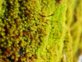 moss upclose by algreat