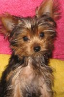 Roxi a Few Months Old by Zorias