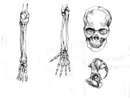 Some anatomical work by Sedjin