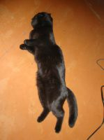 Anfisa the flying cat 5 by Panopticon-Stock