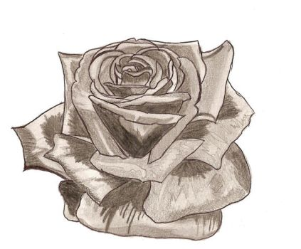 Une rose by x-miss-drawings-x