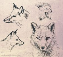 A Bunch of Foxes by Candimente
