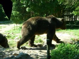Grizzly Bear 28 by Unseelie-Stock
