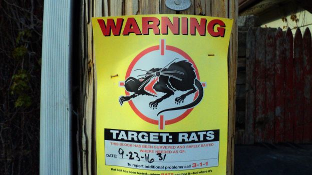 Rat Warning by darkriddle1