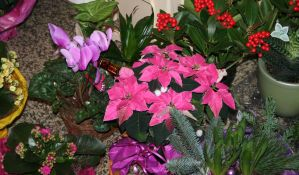 flowers at christmastime by ingeline-art
