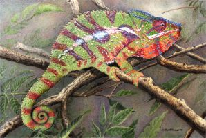 Panther Chameleon by WillemSvdMerwe
