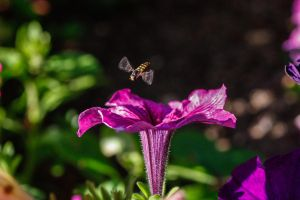Hover Fly by RunLikeATortus