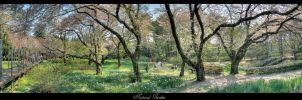 Natural Garden HDR by requiem7892